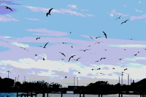 lagoon birds